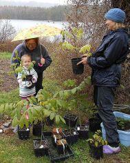 NorthofSmokeyOrchardProject3 Brenna Karey pick up walnut trees SoHarb Farm